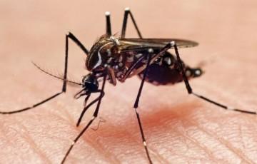 Com aumento de 648% nos casos de chikungunya, Recife tem primeira morte confirmada por causa da doença