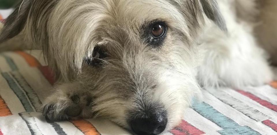 Bazar solidário busca arrecadar doações para tratamento de cadelinha