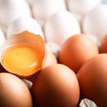 Pernambuco entre os maiores produtores de ovos do país