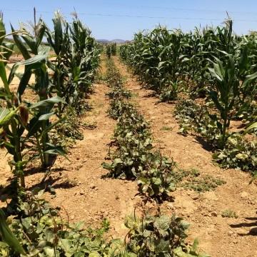 Agricultores pernambucanos começam a receber o Garantia-Safra