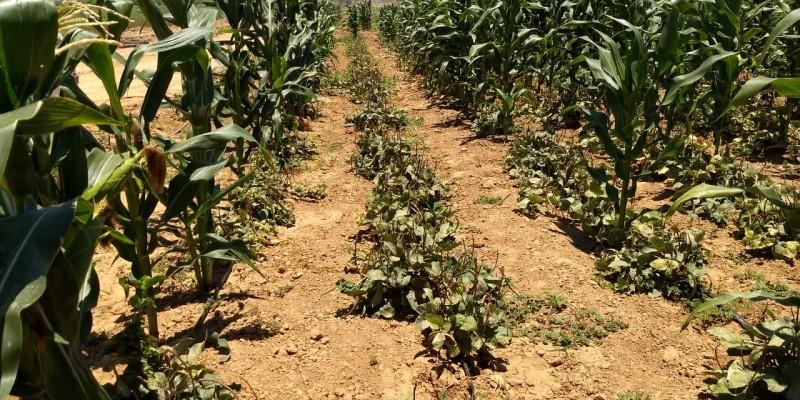 Até o momento foram contemplados 13.811 agricultores e agricultoras de 24 municípios do Agreste e do Sertão