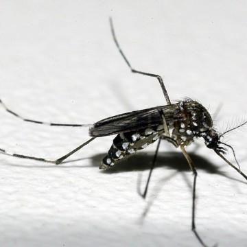 Recife apresenta plano de combate ao Aedes Aegypti em evento da Fiocruz