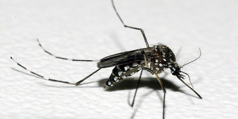 O objetivo do convite é a possibilidade de implantar algumas dessas ações nos programas de controle do mosquito