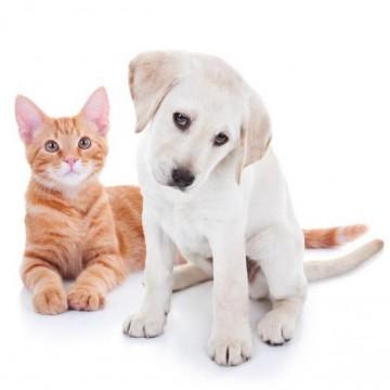 ONG Amigos dos Animais precisa de ajuda!