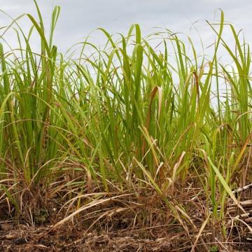 CPRH lança pacto para orientar sobre queimadas nas áreas de cana-de-acúcar