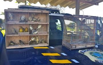 Homem é preso com 36 pássaros silvestres na BR-232 em Pernambuco