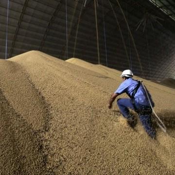 Previsão de crescimento agropecuário cai de 3,8% para 2,4% em 2020