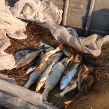 Decreto do seguro-defeso não assegura pescadores de Pernambucanos