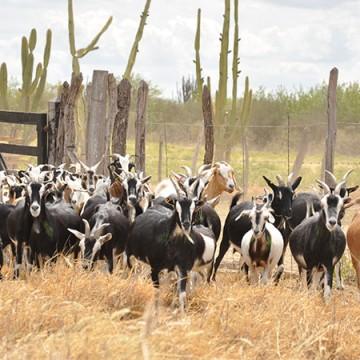 Estados do nordeste articulam comercialização de produtos agrícolas para mercados internacionais
