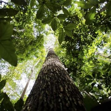 Quanto valem nossas florestas?