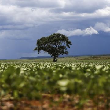 CBN Sustentabilidade: Árvores