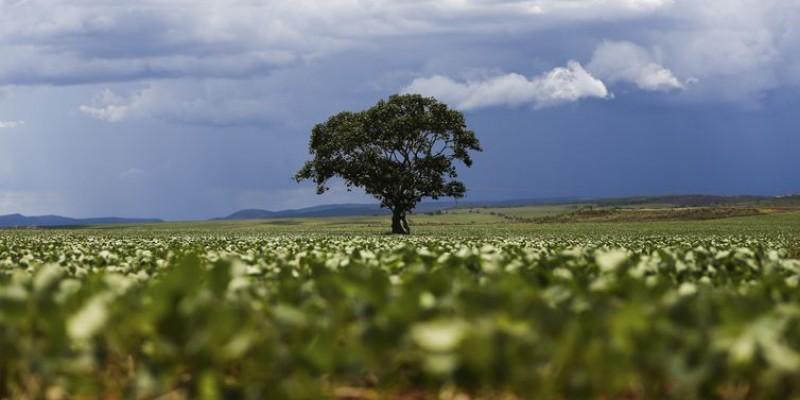 As árvores do campo protegem as lavouras