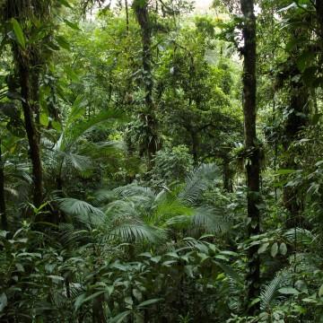 Pernambuco registra desmatamento zero em áreas de Mata Atlântica