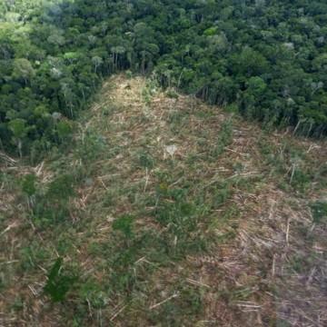 Estados do NE lançam ferramenta para combater desmatamento ilegal