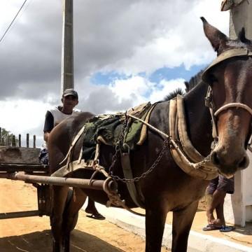 Estado deve reduzir o número de carroças de tração animal em circulação nas cidades