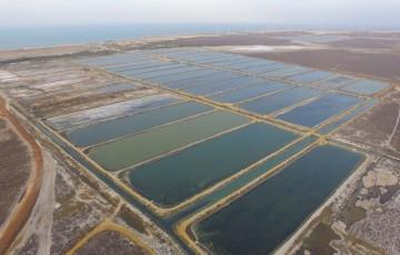 Empresas nordestinas se unem para exportar camarão para os Estados Unidos