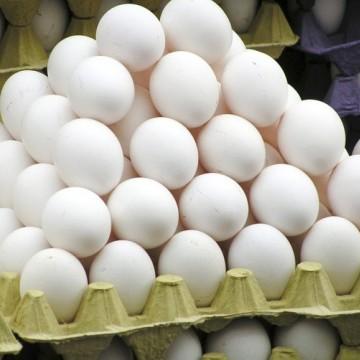 Rastreabilidade dos ovos  está longe do consenso