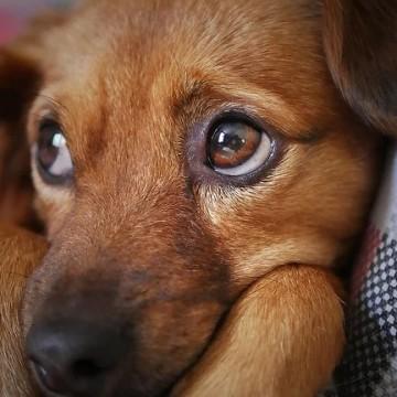 Evento sobre proteção animal será realizado em Agrestina
