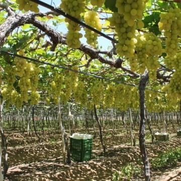 Fruticultura celebra geração de empregos no vale do São Francisco