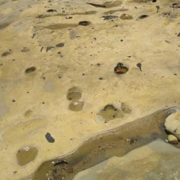 Óleo volta a atingir Goiana, no litoral norte pernambucano