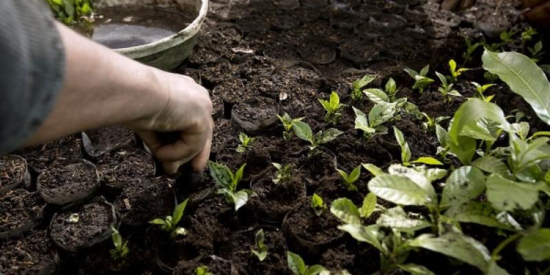 Líder mundial de alimentos concentra-se na agricultura regenerativa e evoluindo para a eletricidade renovável
