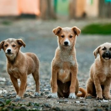 Câmara de Caruaru aprova criação do 'Dia de Combate aos maus tratos de animais'