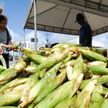 Ceasa monta estratégia para venda do milho sem aglomerações