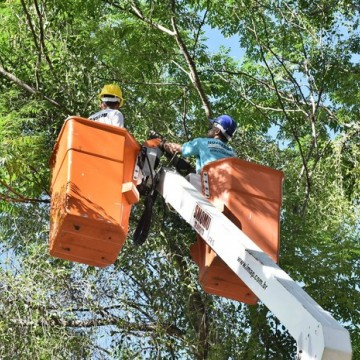 No Recife, poda de árvore poderá ser solicitada pela internet