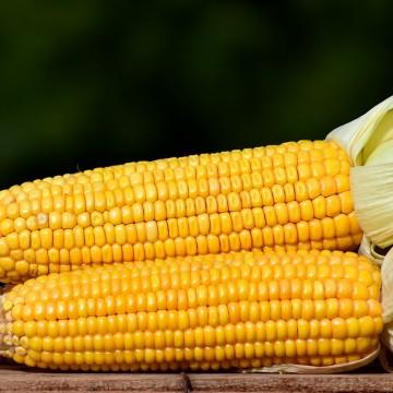 Vendas do milho supera expectativas durante São João