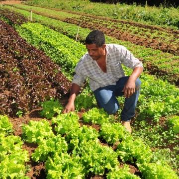 Secretaria de Desenvolvimento Econômico lança o Programa Compra Local
