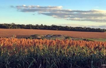 Pesquisa do IBGE aponta que produção agrícola de Pernambuco bate recorde em 2020