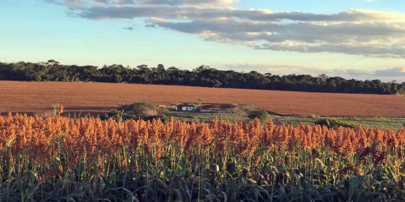 Em 2020, Pernambuco teve 796 mil hectares de área plantada ou destinada à colheita, a maior extensão dos últimos três anos
