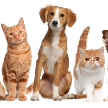 Caruaru terá Dia Municipal de Combate aos Maus Tratos de Animais