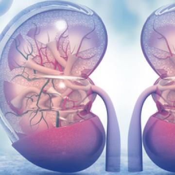 CBN Saúde: Problemas renais