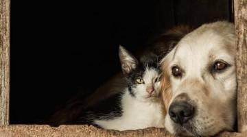 Cães e gatos podem ter covid-19, mas não transmitem a doença