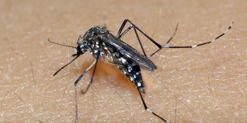 No mesmo boletim epidemiológico, foram notificados 34.131 casos de dengue, 22.257 de chikungunya e outros 3.827 de zika