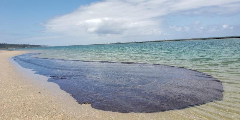 O secretário de Meio Ambiente de Pernambuco José Bertotti comentou que na ocasião além do monitoramento foi traçado estratégias para que o trabalho de remoção continue