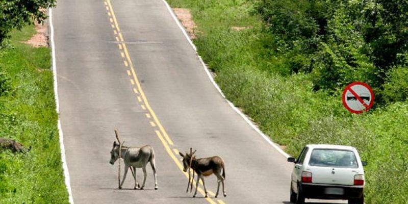 A ação visa conscientizar para os cuidados com animais nas estradas