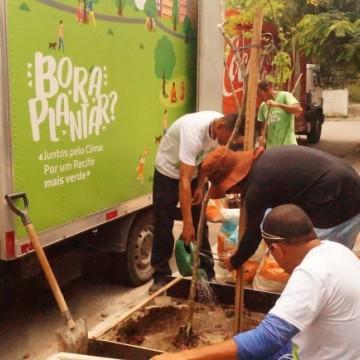 Recife recebe 51 novas mudas de árvores