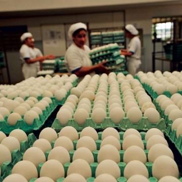 Haverá aumento no valor do ovo e 30% das granjas deverão fechar as portas, segundo vice-presidente da Avipe