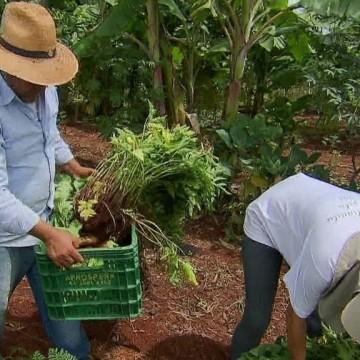 Governo de Pernambuco anuncia compra direta de alimentos aos pequenos produtores rurais