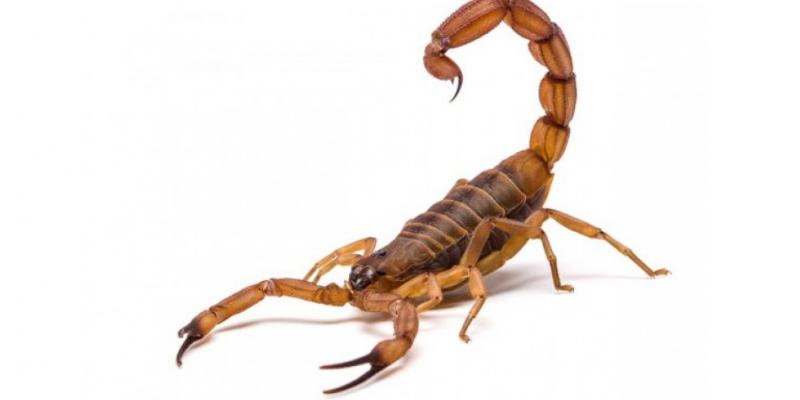 Durante o verão a época mais quente do ano esses animais podem aparecer com maior frequência.