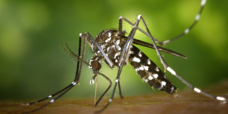 A Secretaria de Saúde do Estadoinformou que foram registrados 11.562 casos suspeitos de dengue em 177 municípios, que representa uma redução de 64,54% se comparado com o mesmo período de 2019