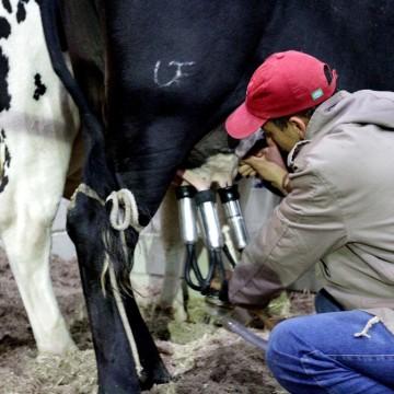 Produtores da bacia leiteira de PE propõem a prorrogação do ICMS e renegociação de empréstimo