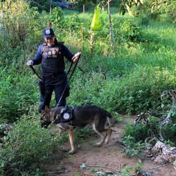 Polícia Civil realiza duas operações simultâneas em Paulista