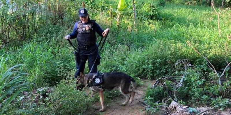 Os grupos atuavam nos bairros de Paratibe e Artur Lundgren, no município de Paulista, sendo responsáveis pelo tráfico de drogas, homicídios, roubo qualificado e associação para o tráfico