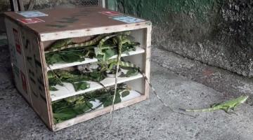 Animais silvestres resgatados em São Paulo são repatriados ao Recife