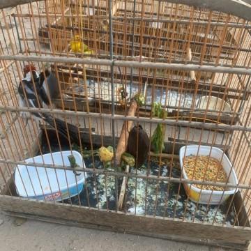 Polícia detém cinco comerciantes por venda ilegal de aves silvestres em feira no Recife