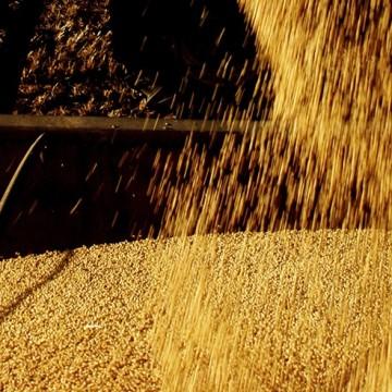 PIB do agronegócio cresce 9,8% no 1º semestre puxado por preços altos dos grãos