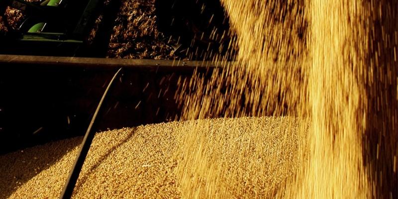 Ramo agrícola cresceu 14,46%, enquanto pecuária diminuiu 2,18% com queda no abate de bovinos
